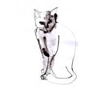 Lámina gato negro