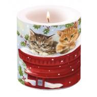 Vela gatos - Correo postal