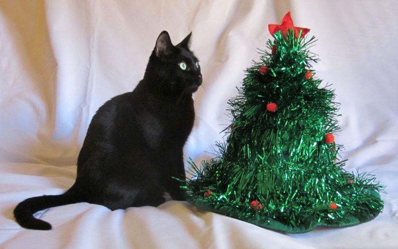 La relación de los gatos y los árboles de Navidad