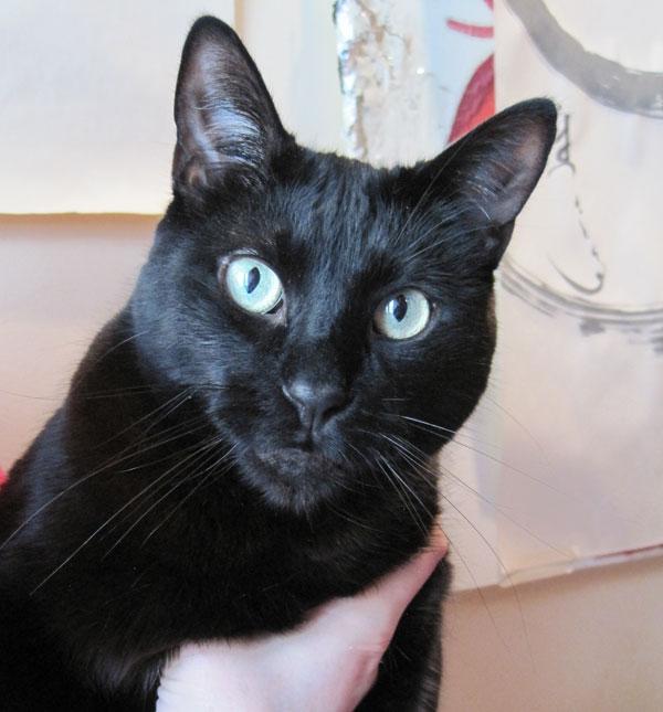 Zen gato negro