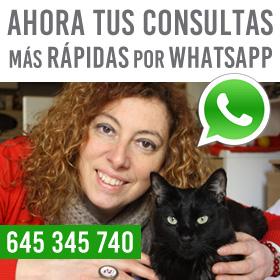 Tus consultas por Whatsapp
